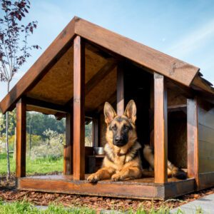 Kennels & Animal Shelters